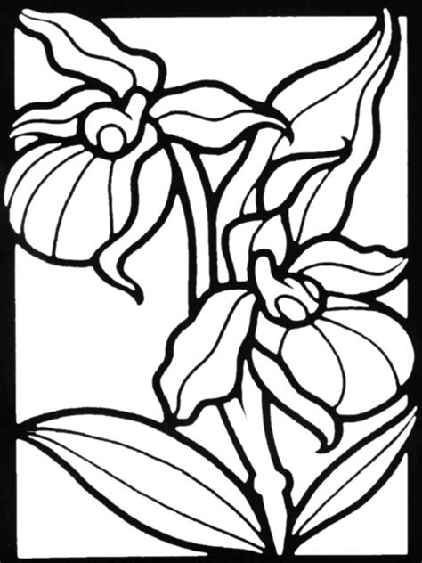 Flower coloring pages: Iris flowers