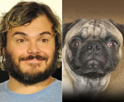 pug look alike and their animal look a likes ny daily news