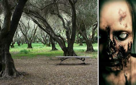 Beware The Lake haunted lake elsinore beware the olive grove