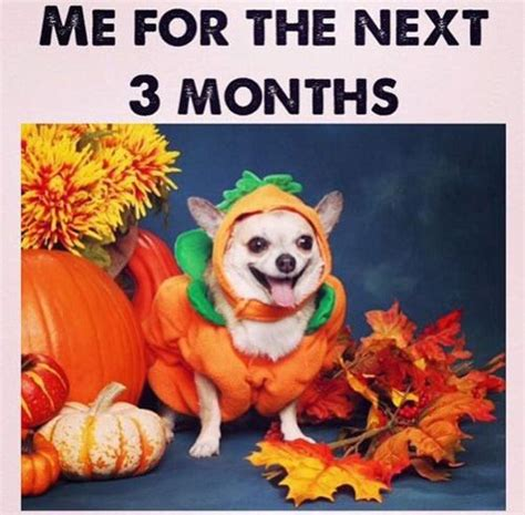 autumn meme 26 memes for anyone who s august and ready for fall