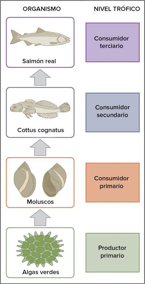 cadena alimenticia acuatica consumidores primarios tenth windsor royal school biology