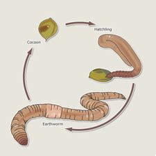 earthworm parts of family gardening worm project