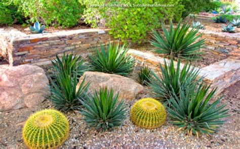 ideal desert landscaping plants at home bistrodre porch and landscape ideas