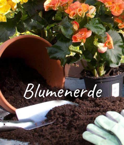 Pflege Pflanzen 3204 by Prachtspiere 9cm Dehner
