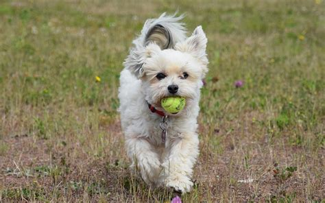 side effects of puppy a list of revolution side effects in dogs dogs health problems