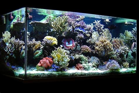 cara membuat filter aquarium air laut uncategorized hesmiyudi