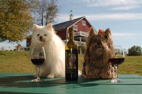 can dogs drink wine wine dogs in america