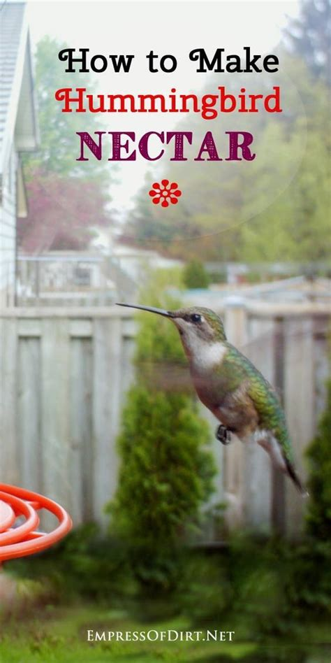 how to make sugar water for hummingbirds xxx video