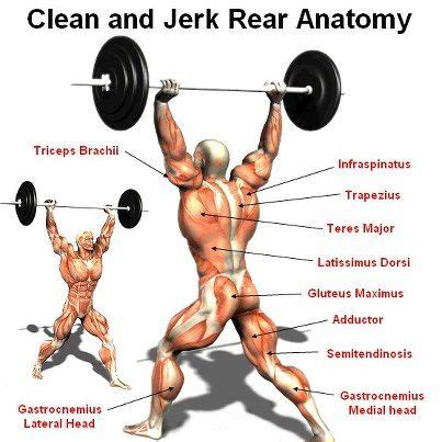 power clean diagram 29 best exercise science images on workouts