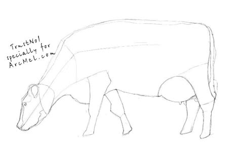 how to a cow how to draw a cow step by step arcmel