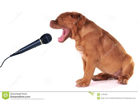 puppy singing puppy singing stock photos image 17186433