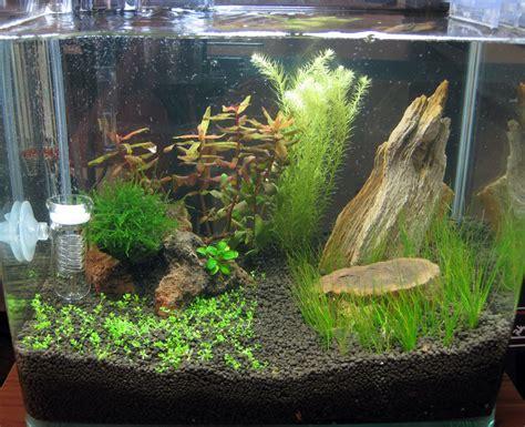 aquascape indonesia finnex 4 gallon the planted tank forum
