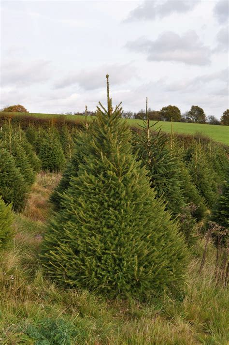 100 christmas tree shop scarborough maine christmas