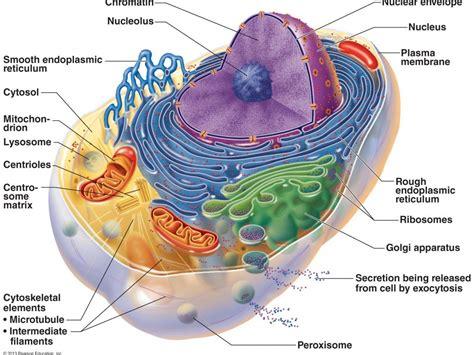biology    syllabus revision notes  mollybuckwald