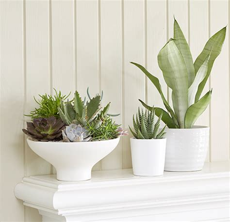 modern houseplants mantlescape with houseplants costa farms