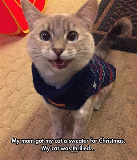 Funny Christmas Cat Memes - best 25 cat love ideas on pinterest so nice cat things
