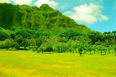 Landscaping Oahu Samabra Yoyo Dreams Unravel And Travel