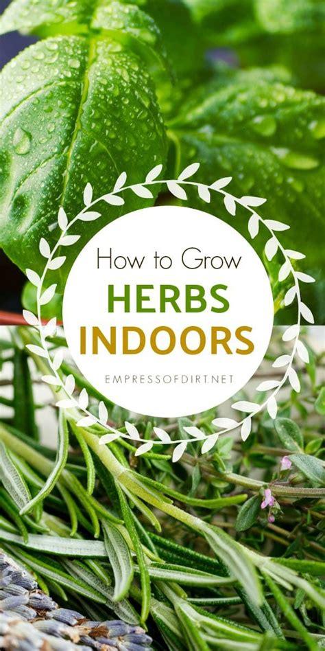how to grow herbs indoors how to grow herbs indoors empress of dirt