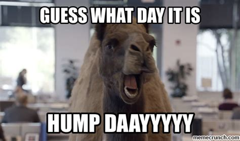 Camel Hump Day Meme - funny hump day memes