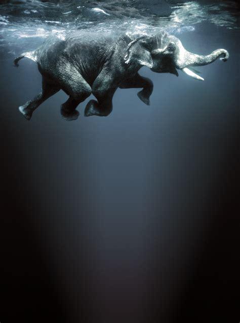 imagenes goticas sorprendentes animales sorprendentes taringa