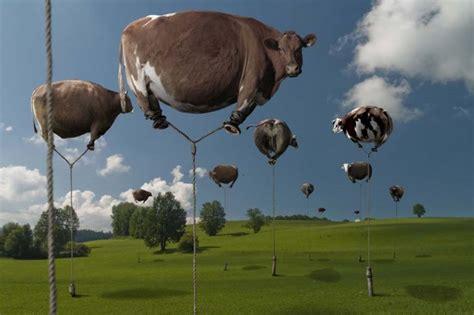 mucche volanti espressioni digitali a proposito di mucche volanti