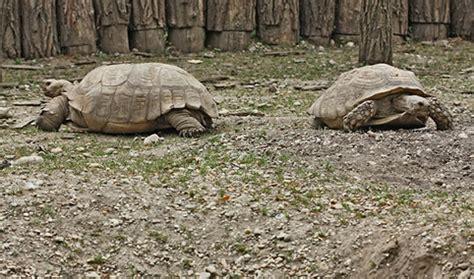 recinto per tartarughe in giardino costruiamo un recinto esterno per le tartarughe terrestri