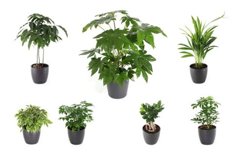 pot 233 es de plantes vertes d int 233 rieur photo sonne07