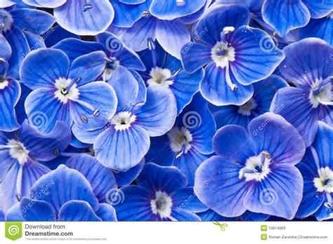 flores azules claras mariposa imagenes de archivo imagen 2050474 flores azules fotos de archivo imagen 19614983
