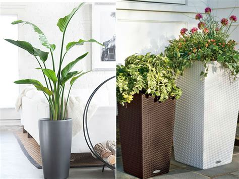 floor plants home decor stylish ways to use indoor plants in your home d 233 cor