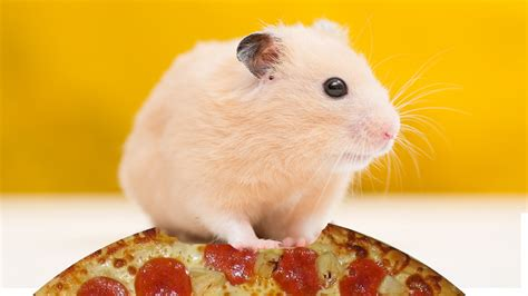 Hamster Kitchen by Pizza Hut Apologises For Giving Away Small Animals With