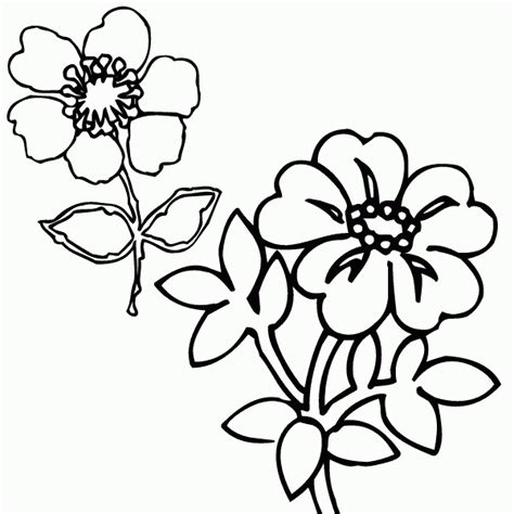 coloring pictures of wildflowers wildflower coloring pages drawings sketch coloring page