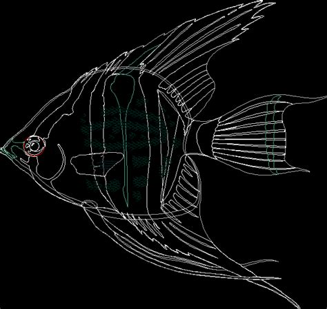 cool cad drawings fish cad dwg fish cad designs cad