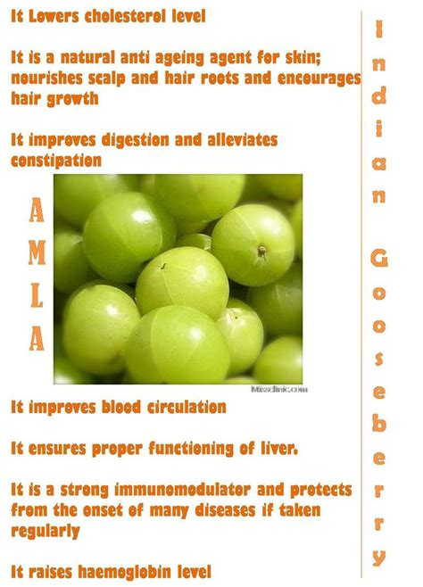 Amla Gooseberry For Hair by 72 Best Images About Gooseberries On Gardens