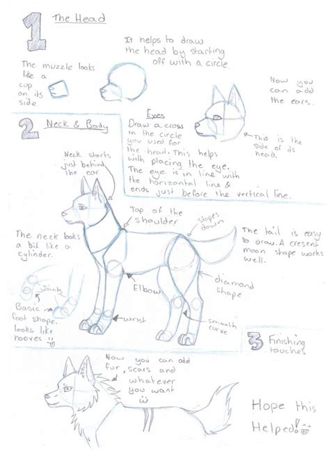 Drawing Guide Wolf Drawing Guide By Silverwolfspirit13 On Deviantart