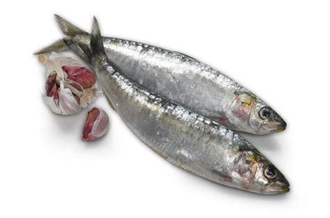 Sarden Mackerel Botan A1 2 buy fresh whole sardines omega3 fish 24hr delivery