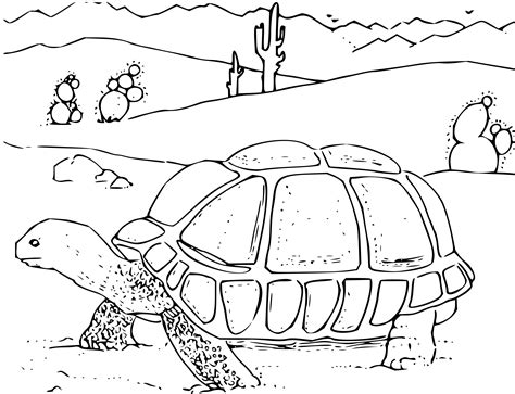 Desert Turtle Coloring Page | clipart coloring book desert tortoise
