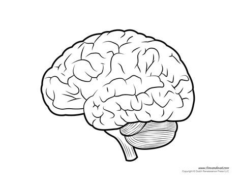 diagram of human brain human brain diagram labeled unlabled and blank