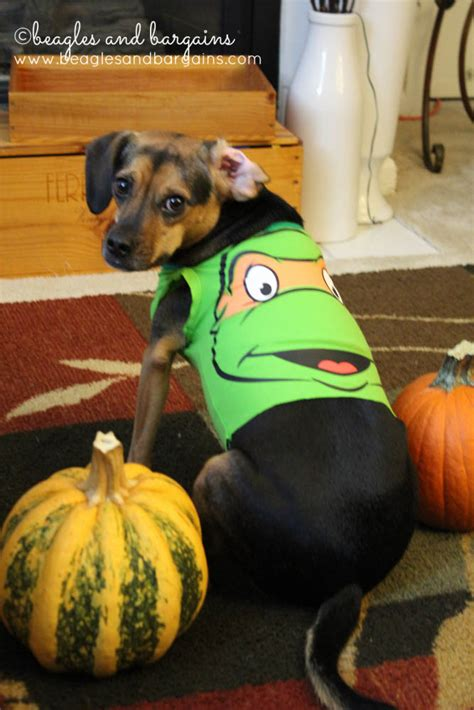 minute diy dog halloween costumes  baby onesies