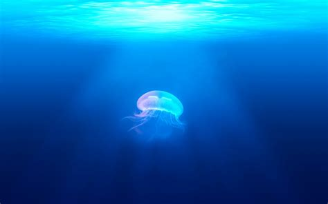 jellyfish underwater hd wallpapers hd wallpapers id