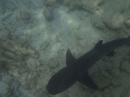 baby shark bahasa indonesia reader tale a trip to karimun jawa indonesia active