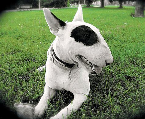 ley de razas de perros peligrosos boo the dogs fotos estas son las 12 razas de perros peligrosos que se