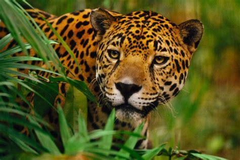 imagenes de animales y plantas de mexico 100 mil especies de plantas animales y hongos de m 233 xico