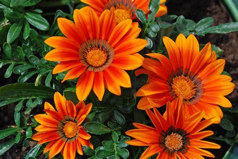 mooie bloemen afbeeldingen grappige afbeeldingen afbeeldingen bloemen oranje bloemen