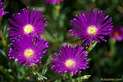 imagenes sobre flores as flores e sua beleza mensagens cultura mix