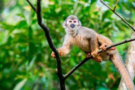 la fauna pictures fauna portal de turismo de caquet 225 caqueta travel