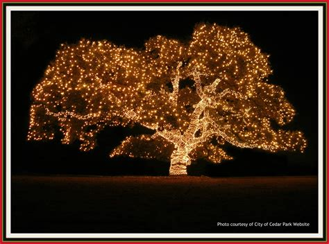 cedar park illuminates largest oak tree with over 65 00