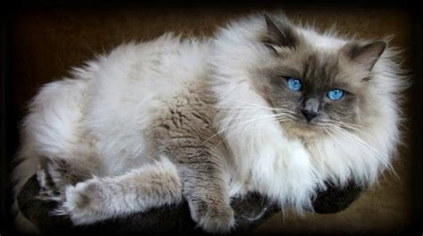 2 ragdolls better than 1 with ragdolls let s play a what s that color