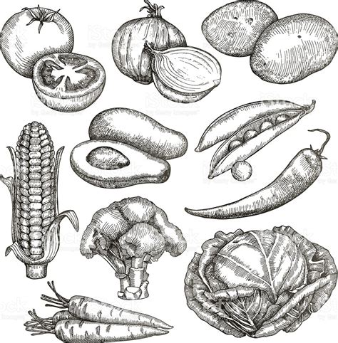 Drawing Vegetables by Vegetables Sketched Pencil And In Color