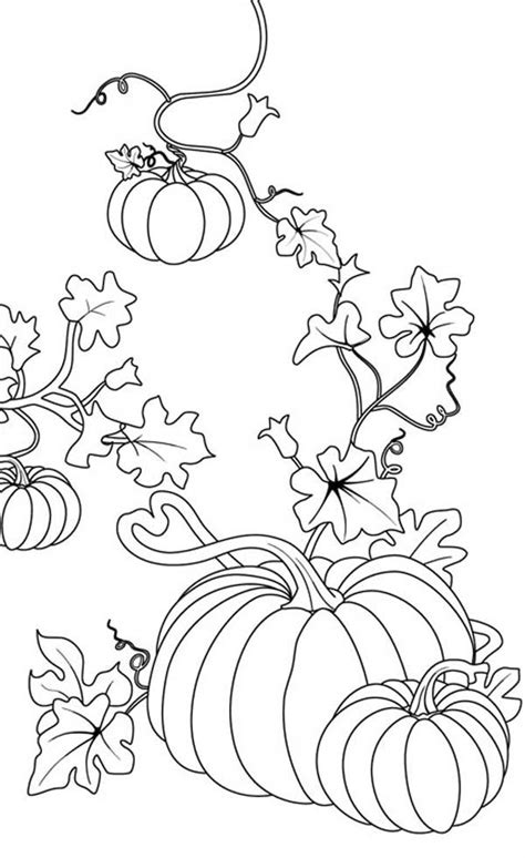 pumpkin coloring page for adults pumpkins pumpkins coloring page for halloween event