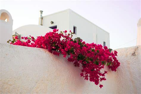 7 tips to help you start housesitting gkm gkm